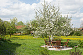 Blossoming apple tree on a small gravel terrace in meadow, sitting area under the tree