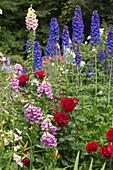 Color combination with Rosa, Digitalis purpurea and Delphinium