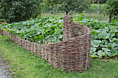 Decorative bedding made of wicker, with pumpkins growing behind it