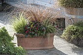 Winterproof planted terracotta box