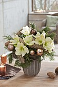 Christmas bouquet of white Hippeastrum, Pinus branches
