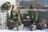 Snowy balcony with hardy groves