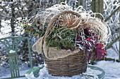 Winterly planted basket with Ilex (Holly), Heuchera