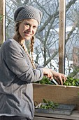 Woman harvesting spinach 'Matador' in the cold conservatory