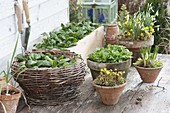 Winter vegetables in box and basket on terrace table