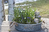 Zinc shell with Galanthus nivalis (snowdrop) and Crocus