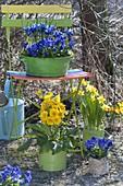 Blue-yellow spring arrangement with deck chair in the garden