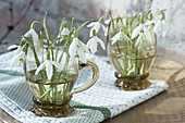 Small bouquets of Galanthus nivalis in glass cups