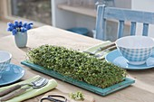 Cress as edible table decoration on turquoise saucer