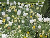 Weiss - gelber Frühling im Hofgarten Freising