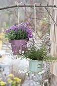 Boronia anemonifolia, rosemary, sage