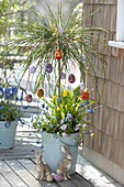 Cytisus as an Easter tree decorated with colorful Easter eggs