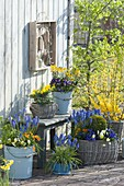 Spring terrace planted blue-yellow