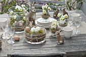 Easter table decoration with horned violets on the terrace