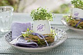 Cress (Lepidium) seeded in duck egg with stamped bird on it