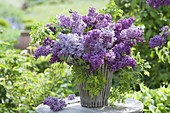 Fragrant bouquet of syringa and wild Rose branches
