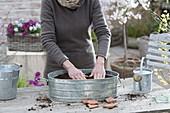 Grow radish in a zinc pan