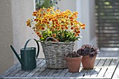 Plant basket with slipper flowers
