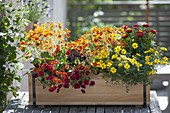 Balcony box planted in fiery colors