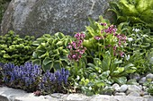 Front yard with perennials and natural stones