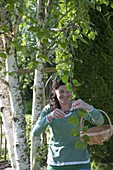 Woman cutting fresh betula shoots and leaves for tea