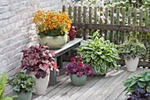 Terrace with plants for the partial shade
