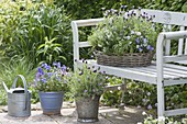 Basket and pots of herbs and edible flowers on the bench
