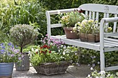 Baskets and pots of herbs and edible flowers on and on bench