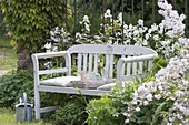 White bench between Hesperis matronalis 'Alba'