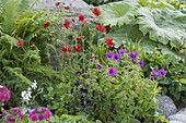 Colorful early summer bed, Geranium psilostemon