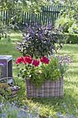 Mit Kräutern und Geranie bepflanzter Korb im Garten