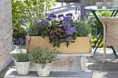 Blue-violet scent box with lavender (Lavandula), heliotropium