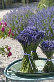 Standing bouquets of lavender (Lavandula) on a shallow bowl