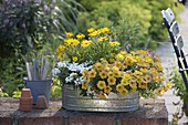Zinc tub planted summery in yellow-white