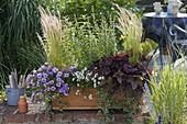 Wooden box with Calibrachoa Unique 'Lavender'