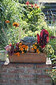 Terracotta box with vegetables and balcony flowers