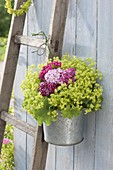Small Alchemilla mollis bouquet in zinc bucket hung on ladder