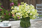 Teapot bouquet of Alchemilla mollis and chamomile