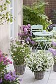 Fragrant terrace with phlox paniculata