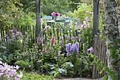 Half-shady flower bed with Campanula, Digitalis mertonensis