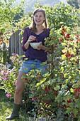 Redcurrants (Ribes rubrum) in the garden