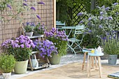 Blue-violet terrace with phlox, Buddleja