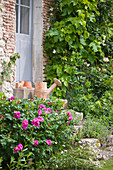 les JARDINS De Roquelin, Loire Valley, FRANCE: A Vintage WATERING CAN On THE15TH CENTURY FARMHOUSE STEPS with ROSE 'Roseraie De L'Hay'