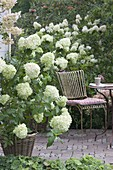 Patio on terrace with white flowers