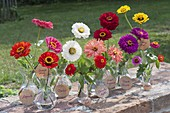 A slightly different tableau with zinnia varieties