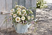 Bouquet of white Zinnia and Lathyrus in watering can