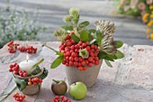 Terracotta pots with berry decoration sorbus