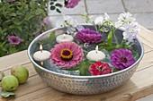Silver bowl with zinnia flowers, Lathyrus