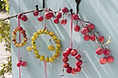 Decoration with ornamental apples, small wreaths from Malus 'Evereste' red