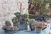 Zinc vessels planted with succulents